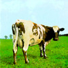 Atom Heart Mother Pink Floyd